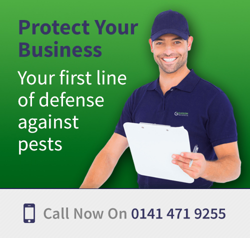Pest Control Services Glasgow