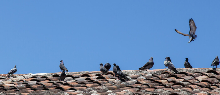 Why You Need to Address Bird Droppings