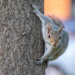 Four Reasons Why Squirrels Are a Problem